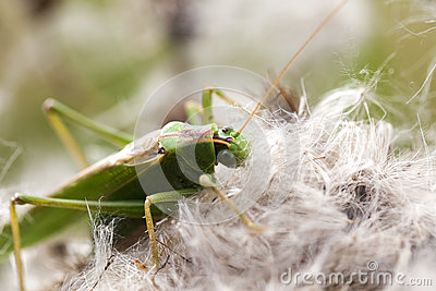 Green grasshopper - food intake