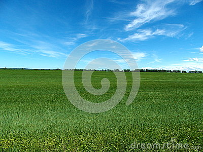 Green grassy farm field