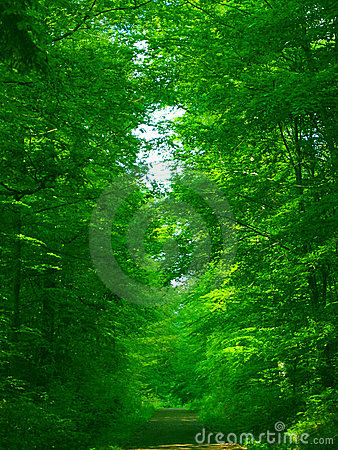Green green forest