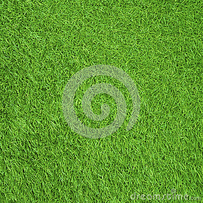 Green gress