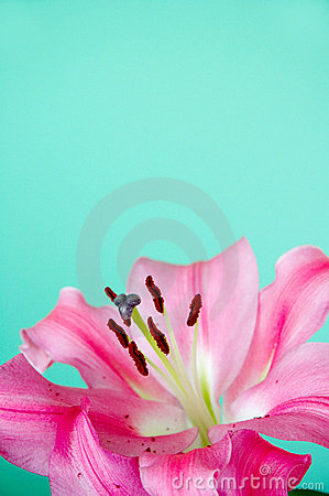 Green ground with pink lily