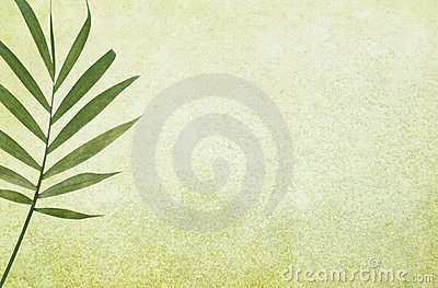 Green Grunge Background with Palm Leaf