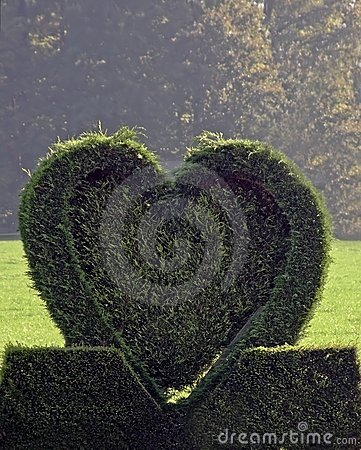 Green heart from conifer