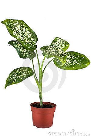 Green home plant in flower pot