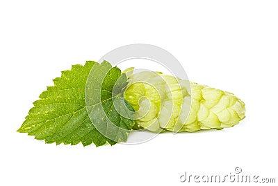 Green hop