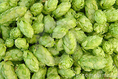 Green hops