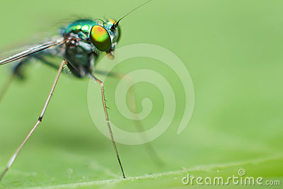 Green insect close up