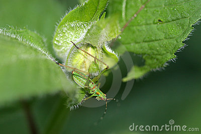 Green insect on plant leaf