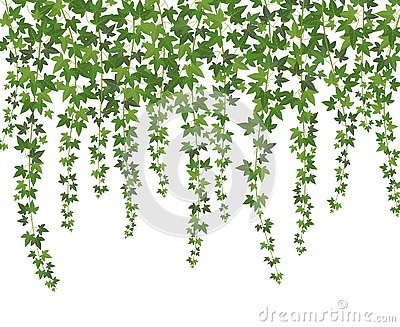 Green ivy. Creeper wall climbing plant hanging from above. Garden decoration ivy vines background Vector Illustration