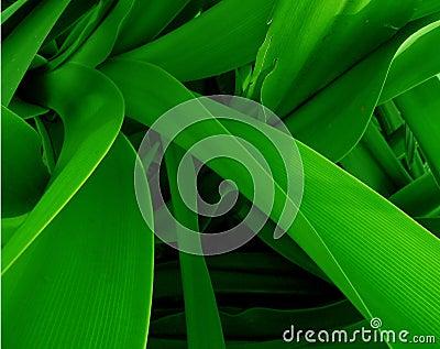 Green Jungle