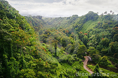 Green jungle of Hawaii