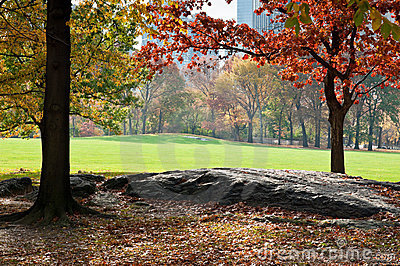 Green lawn in Central Park