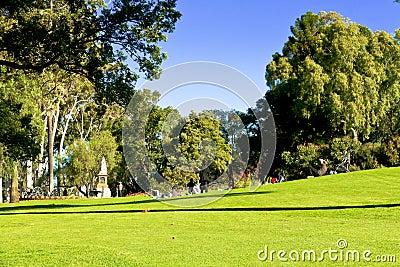 Green lawn in public