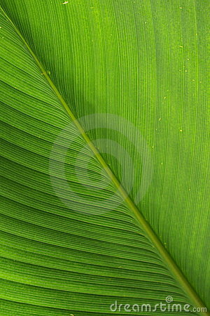 Free Green Leaf Royalty Free Stock Image - 15244296