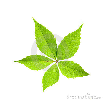 Free Green Leaf Stock Photos - 2941933