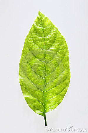 Free Green Leaf Royalty Free Stock Images - 3565489