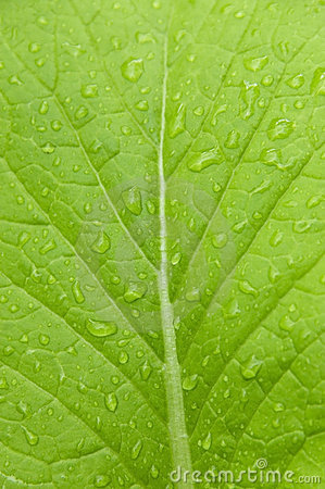 Free Green Leaf Stock Image - 3836751