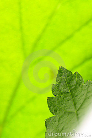 Green Leaf Stock Photo - Image: 5192290