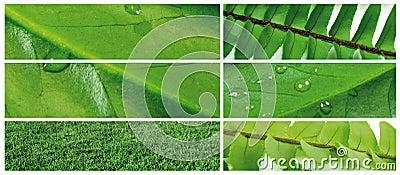 Green leaf 6