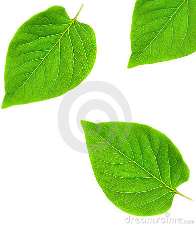Free Green Leaf Abstract Frame Royalty Free Stock Photos - 2953978