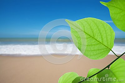 Green leaf on beach