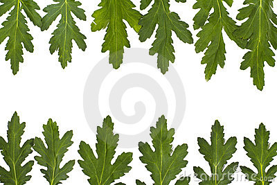 Green leaf border over white. closeup