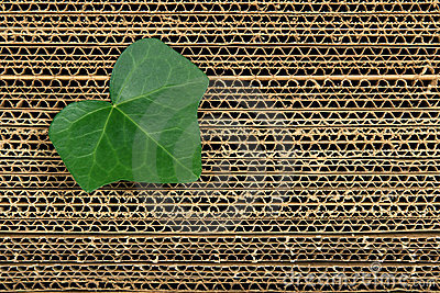 Green leaf on cardboard background