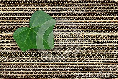 Green leaf on cardboard background