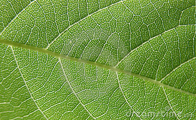 Green leaf closeup 4