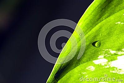 Green leaf - detail