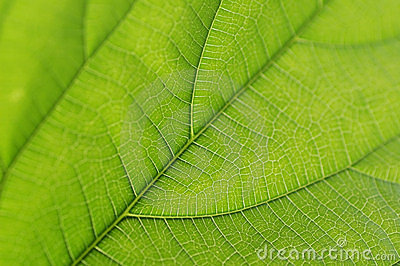 Green leaf details