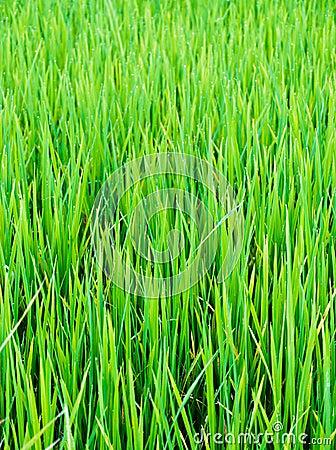 Green leaf of farm
