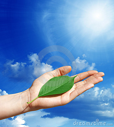 Green leaf in a human hand