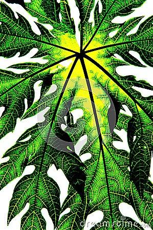 Green leaf isolate (papaya leaf)