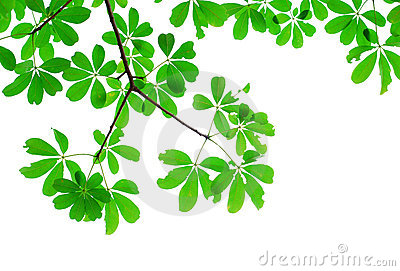 Green leaf isolated in nature