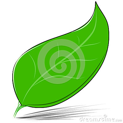 Green leaf isolated on white vector illustration