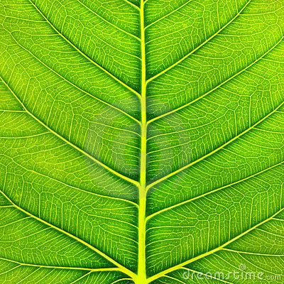 Free Green Leaf Macro Royalty Free Stock Images - 23958599