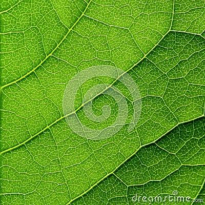 Free Green Leaf Macro Royalty Free Stock Photo - 28983485