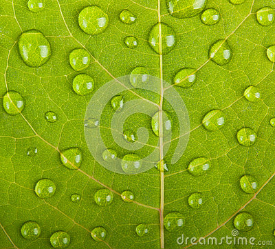 Free Green Leaf Macro Stock Photos - 33404283