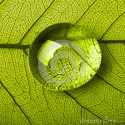 Free Green Leaf Macro With Drops Royalty Free Stock Photos - 51815638