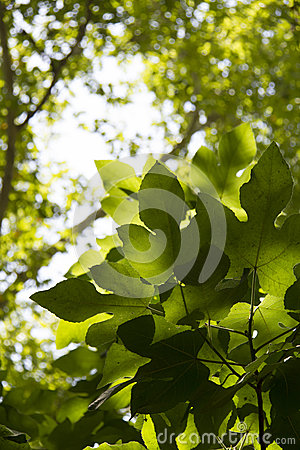 Green leaf in the morning