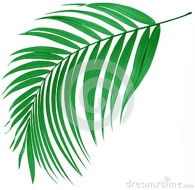 Free Green Leaf Of Palm Tree Stock Image - 41386261