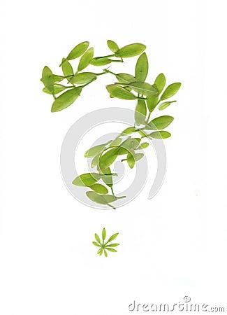 Green Leaf Pattern at Askives