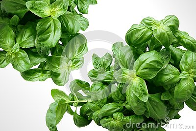 Green Leaf Plant Free Public Domain Cc0 Image