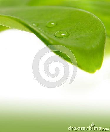 Green leaf and a rain-drop