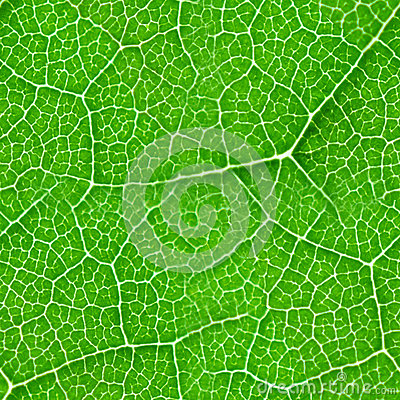 Free Green Leaf Seamless Texture Royalty Free Stock Image - 35841066