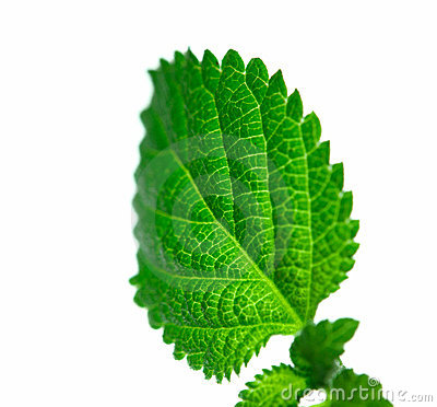 Free Green Leaf Structure Stock Photography - 7297902