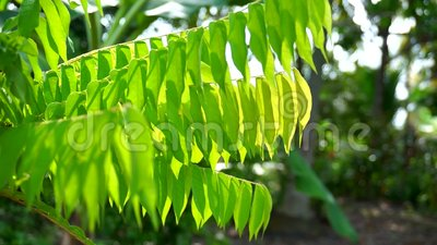 green leaf with sunlight stock video footage
