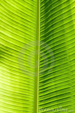 Free Green Leaf Texture Royalty Free Stock Photos - 10091088