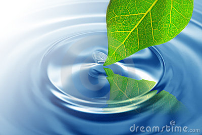 Green leaf touching water